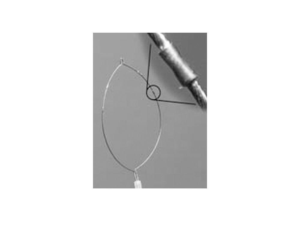 Jumbo Oval  Grabber Snare 1.8mm x 240cm 12.5cm Loop